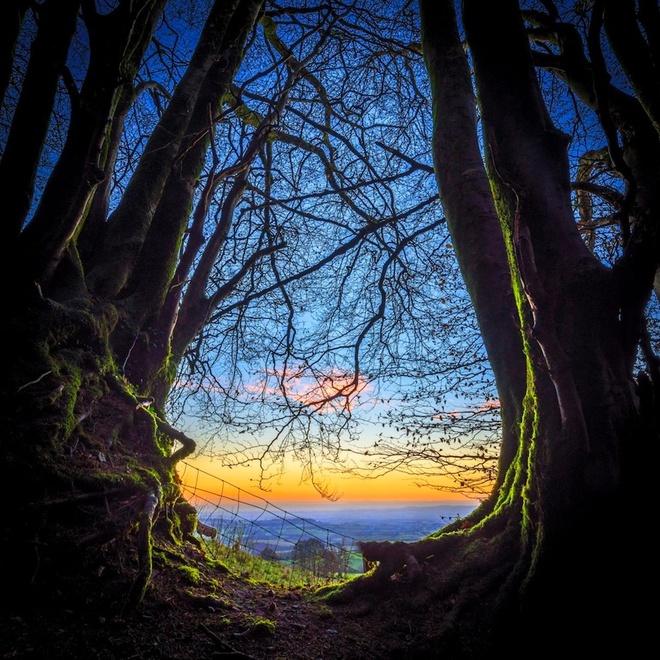 Loat anh ngoan muc nhat trong nam 2014 (ky 4) hinh anh 3 Rạng động trong một khu rừng gần làng Brompton Ralph, hạt Somerset, Anh. Ảnh: Barcroft