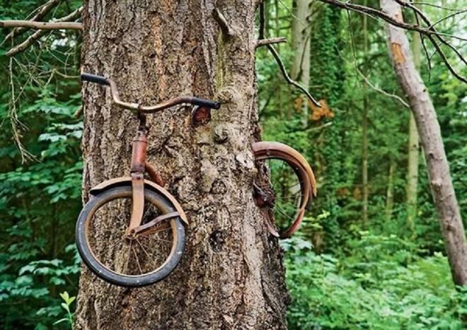 Nhung thuc vat quai di bac nhat the gioi (ky 1) hinh anh 1 Cây ăn xe đạp quái dị khiến đảo trở thành một địa điểm tham quan nổi tiếng. Ảnh: