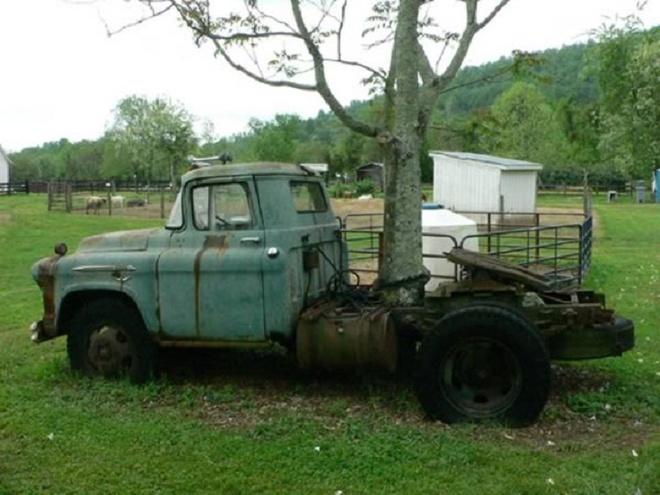 Nhung thuc vat quai di bac nhat the gioi (ky 1) hinh anh 2 Một cái cây ở bang Virginnia mộc xuyên qua xe tải và phát triển bình thường. Ảnh: