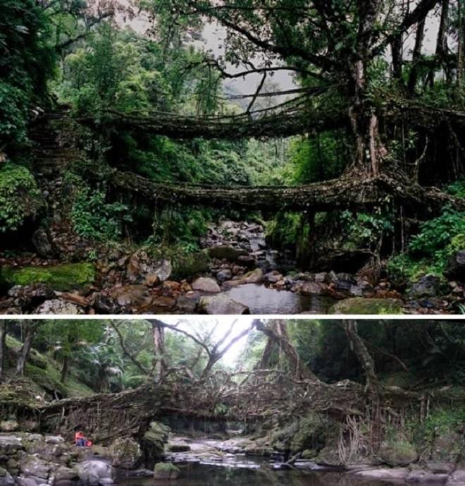 Nhung thuc vat quai di bac nhat the gioi (ky 1) hinh anh 5 Bộ lạc War-Khasis ở thị trấn dùng rễ cây đa búp đỏ làm cầu. Ảnh: