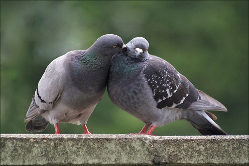 IS ban hanh lenh cam ky quai ve chim bo cau hinh anh