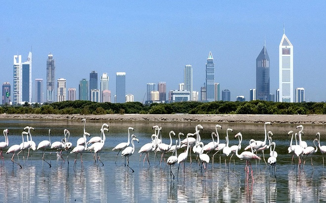Qua trinh lot xac cua thanh pho choc troi Dubai hinh anh 13