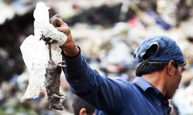 Indonesia: Bat mot con chuot, nhan gan 2 USD hinh anh