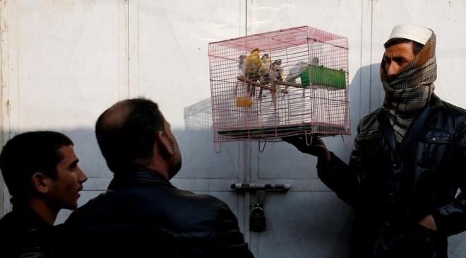 Cho chim o Kabul: Noi noi buon chien tranh lui lai hinh anh