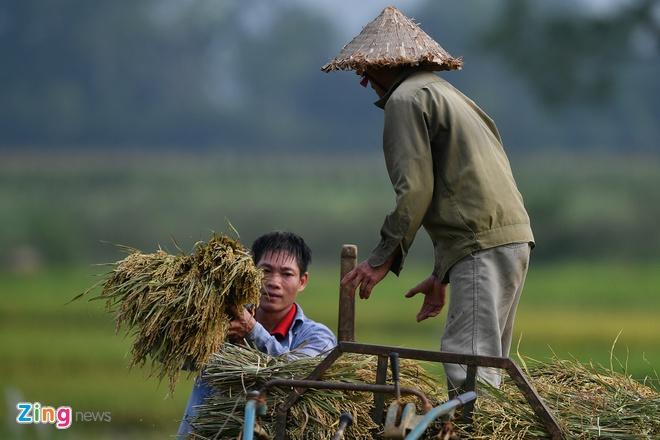 Viet Nam xuat khau lo gao thom dau tien sang EU theo EVFTA anh 1