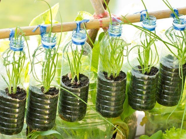 Làm sao để tái chế chai nhựa vừa hữu ích, vừa bảo vệ môi trường - Đời sống