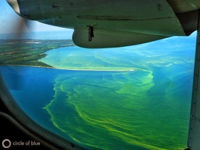 Tao doc no ruc ro tren ho Erie hinh anh 9 Số lượng tảo giảm xuống một chút bắt đầu vào những năm 1970, khi các quy định và cải tiến trong nông nghiệp và xử lý nước thải hạn chế lượng phốt pho đổ vào hồ Erie. Nhưng vấn đề môi trường ảnh hưởng do lượng phốt pho cao làm phát sinh tảo lục lại nổi lên trong những năm gần đây.