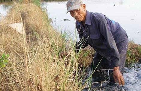 Hien tuong la: Chan den thui sau khi loi ruong hinh anh 1 Ông Võ Văn Thành đang nhổ cỏ trên cánh đồng Tràm (phường Thạnh Mỹ Lợi, quận 2), cạnh ông nước ruộng sủi đầy bọt trắng. Ảnh: TRẦN NGỌC