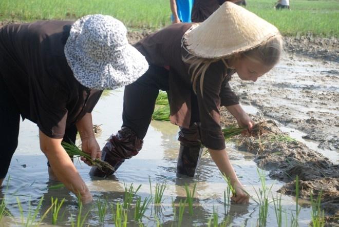 Khach Tay chan lam tay bun lam nong dan Viet hinh anh 4 Cấy lúa. Ảnh thethaovanhoa