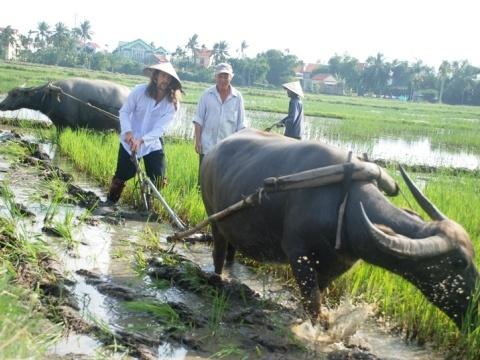 Khach Tay chan lam tay bun lam nong dan Viet hinh anh 1 Du khách tây tập kéo cày trên ruộng. Ảnh Thethaovanhoa