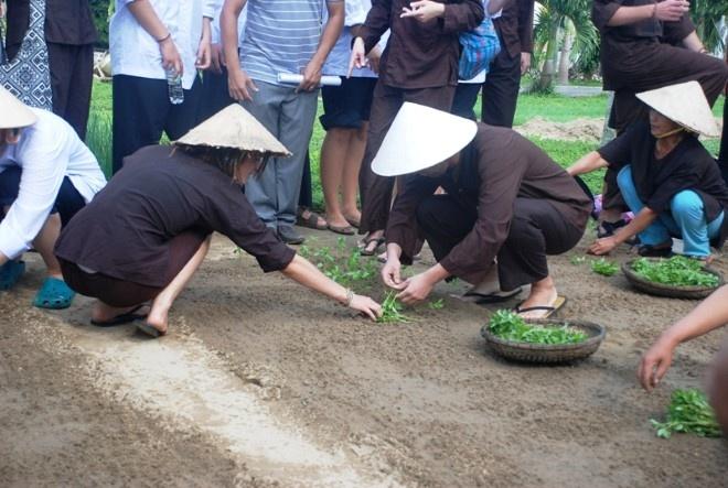 Khach Tay chan lam tay bun lam nong dan Viet hinh anh 3 Thử làm nông dân trồng rau. Ảnh thethaovanhoa