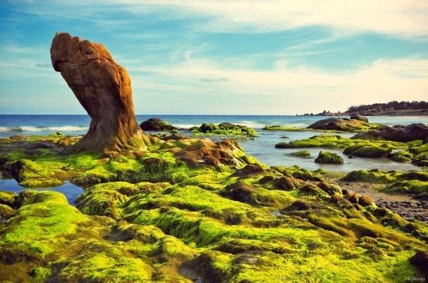 Nhung buc anh khien ban kho tin la chup o Viet Nam hinh anh 7 Bãi biển Cổ Thạch tọa lạc tại một nơi vắng vẻ thuộc địa phận xã Bình Thạnh, huyện Tuy Phong, tỉnh Bình Thuận, cách thành phố Phan Thiết khoảng 90km, mặc dù đã được đưa vào khai thác nhưng biển nơi đây vẫn giữ nguyên nét hoang sơ