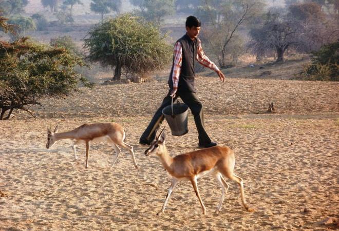 Nếu những con vật già yếu hoặc bị thương sẽ được người dân thay nhau chăm sóc.