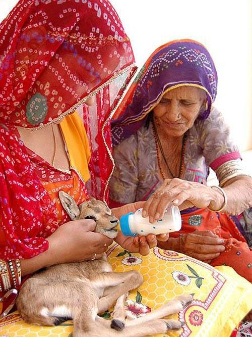 Họ san sẻ phần lương thực ít ỏi của mình cho những con vật. Hàng ngày, người dân trong làng tự động bỏ lương thực vào một thùng chứa, rồi rắc số lương thực đó khắp nơi trong và ngoài làng để những con vật có thể thoải mái ăn.