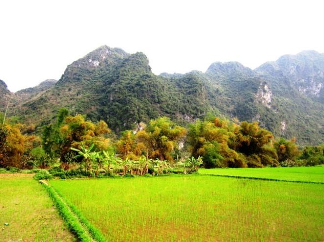 Ngo ngang truoc 'song nui' Cho Chu hinh anh 7 Lũy tre làng dưới chân những sóng núi