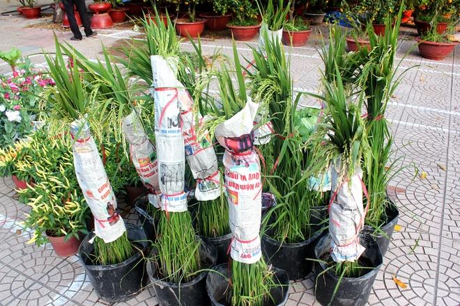 Kieng la hoi ngo o cho hoa Tet Sai Gon hinh anh 8