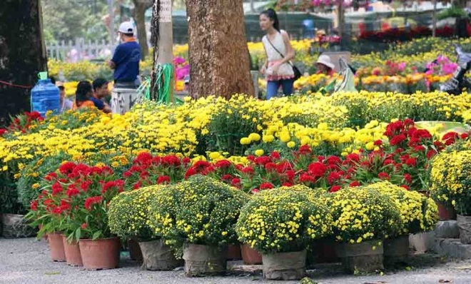 Khai truong nhieu cho hoa Tet, Wi-Fi mien phi hinh anh 1