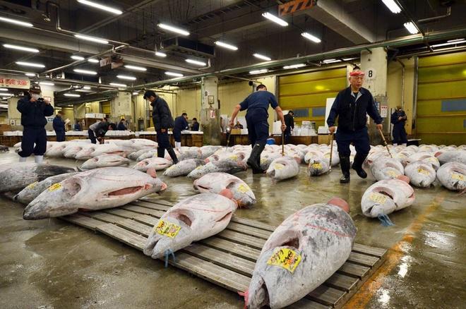 Kết quả hình ảnh cho Chợ cá Tsukiji triệu đô tại Nhật Bản và những điều thú vị