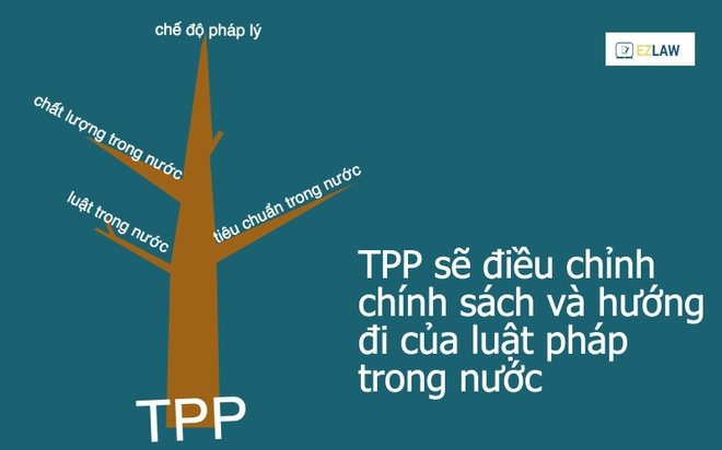 10 kien thuc can ban ve hiep dinh TPP hinh anh 7