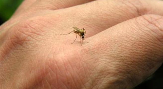 Thai phu 33 tuoi o TP HCM mac Zika do muoi dot hinh anh 1