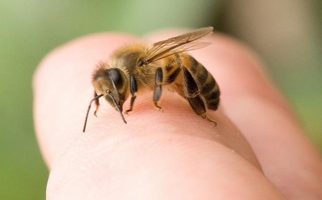 Nguoi dan ong bat tinh giua duong sau khi bi ong dot hinh anh 1