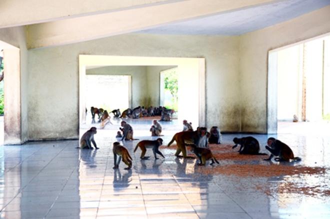 """Den tham 'Hoa qua son' o Bai Tu Long hinh anh 1 """"Nhà ăn"""" của những chú khỉ ở """"Hoa quả sơn""""."""