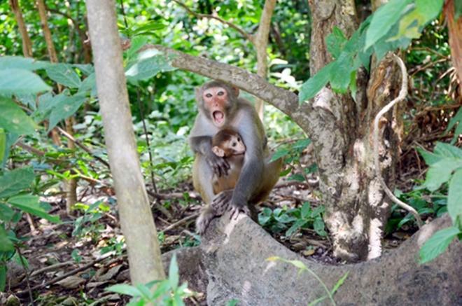 Den tham 'Hoa qua son' o Bai Tu Long hinh anh 2 Khỉ mẹ và khỉ con.