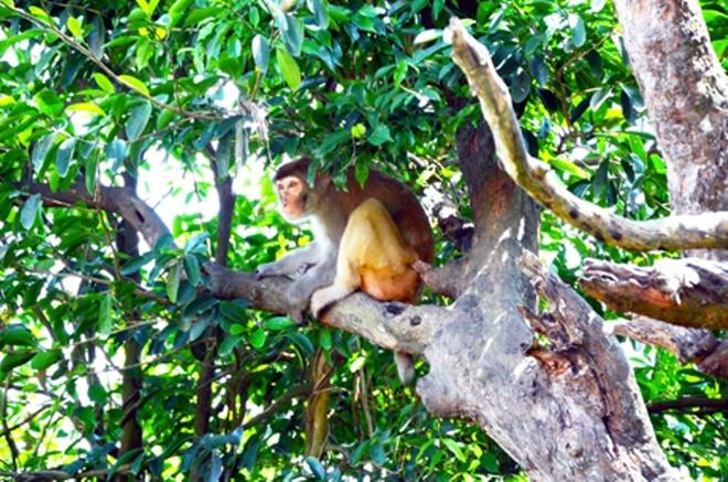 Den tham 'Hoa qua son' o Bai Tu Long hinh anh 3 Chú khỉ đầu đàn đang làm nhiệm vụ cảnh giới.