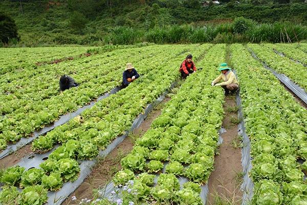 Người Nhật sang VN làm nông rồi xuất lại chính quốc ngày càng nhiều