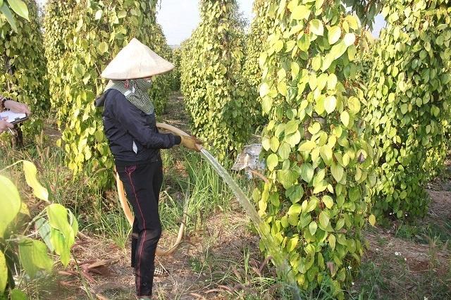 Dân Việt rớt nước mắt trên mỏ 'vàng đen' số 1 thế giới