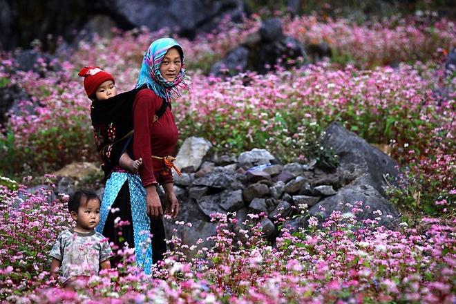 Lac loi voi nhung con duong hoa tuyet dep o Viet Nam hinh anh