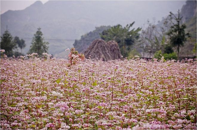 Lac loi voi nhung con duong hoa tuyet dep o Viet Nam hinh anh 3