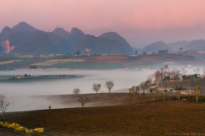 Những thảo nguyên mênh mông, những đồi chè chìm trong không gian tĩnh mịch yên bình của buổi sáng sớm. Do địa hình đặc thù nên cao nguyên Mộc Châu thường xuyên xuất hiện sương mù kéo dài từ mùa thu cho tới hết mùa xuân. Ảnh: Mèo Già