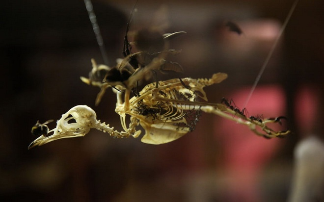 Bao tang chuyen suu tap nhung thu dang so, khac thuong hinh anh 10 Bộ xương của một chú chim.