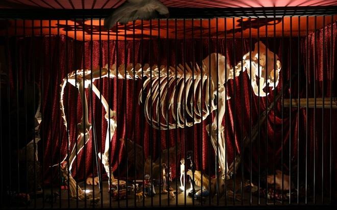 Bao tang chuyen suu tap nhung thu dang so, khac thuong hinh anh 5 Bảo tàng còn trưng bày xác khô của một số loài động vật hoang dã hay động vật nhồi bông.