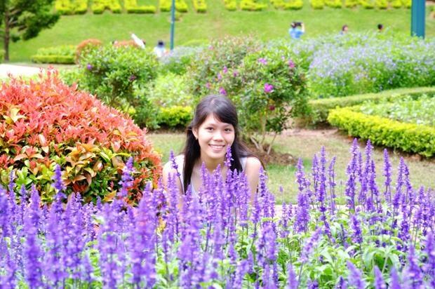 Một loài hoa màu tím…