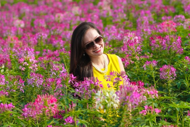 Gioi tre me chup anh canh dong hoa tuy diep ven Ho Tay hinh anh