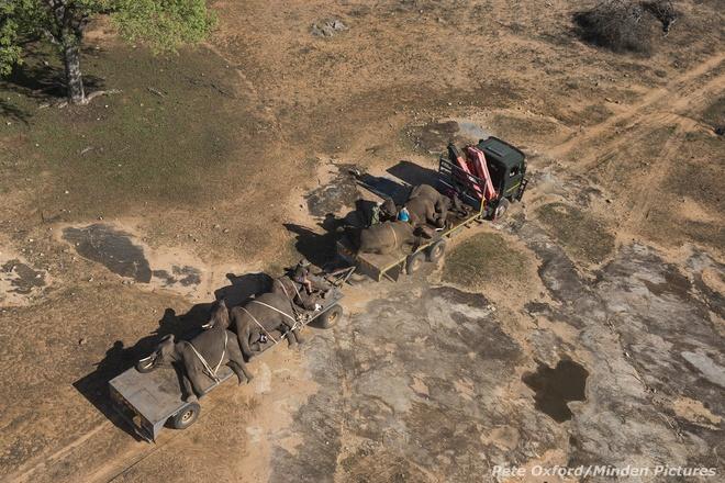"""Tiem thuoc an than de van chuyen voi hinh anh 5 """"Chúng tôi có mặt tại đây tại thời điểm này, và bị buộc phải dùng các biện pháp mạnh mẽ, chính là để bảo vệ sự an toàn cho loài voi, loài vật đã trở thành biểu tượng của Châu Phi. Có một sự thật đáng xấu hổ là chúng vẫn đang gặp nguy hiểm…"""", Oxford nói."""