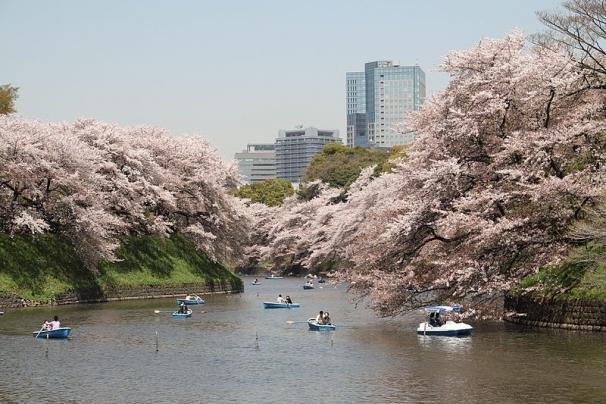 10 noi ngam hoa anh dao dep nhat the gioi hinh anh 9 5. Kênh Chidorigafuchi, Tokyo, Nhật Bản. Con kênh nằm trong Imperial Palace là một trong những địa điểm ngắm hoa anh đào nổi tiếng của Nhật Bản.