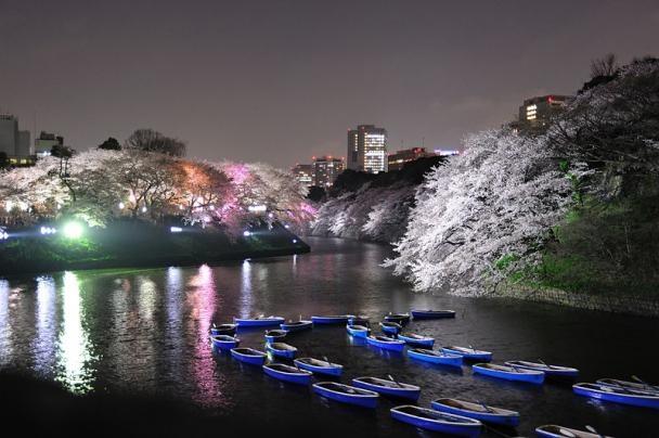 10 noi ngam hoa anh dao dep nhat the gioi hinh anh 10 Nhiều người đến từ khắp Nhật Bản tới đây để thưởng thức hoa anh đào vào mùa xuân từ tháng 3 tới tháng 4. Bạn có thể thuê thuyền đi dọc con kênh để ngắm những bông hoa trắng như tuyết, với tường hào bằng đá của Imperial Palace dọc con kênh.
