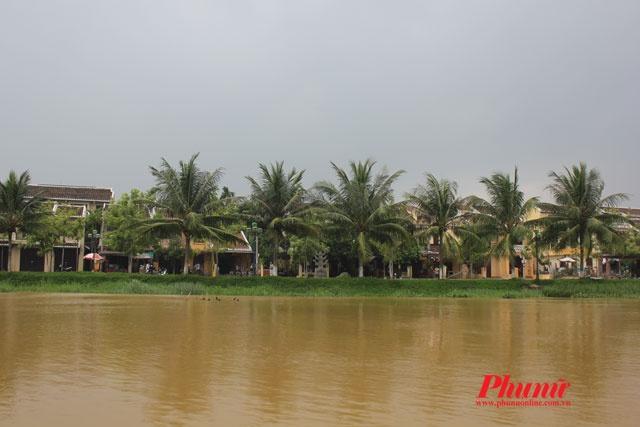 Thu tha kham pha Hoi An bang xe dap hinh anh 3 ... Tận hưởng làn gió mát lành từ sông Hoài và lắng tai nghe tiếng lá dừa reo vui trong gió.