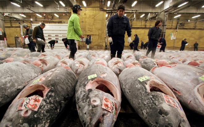 18 trai nghiem lam nen chuyen du lich Nhat Ban dung nghia hinh anh 3 3. Đi chợ cá Tsukiji vào buổi sáng sớm  Tsukiji là một trong những chợ cá và hải sản lớn nhất thế giới, nơi bán hơn 400 loại thủy hải sản, từ những loài cá, tôm giá rẻ tới những loại cua, ghẹ có giá tới hàng trăm USD. Khu chợ này là nơi cung cấp nguồn nguyên liệu cho rất nhiều nhà hàng, khách sạn trên toàn thế giới và cũng là một địa điểm được khách du lịch ưa thích ở Tokyo.