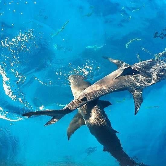 Nhung trai nghiem du lich ban nen thu mot lan trong doi hinh anh 15 Bơi cùng những con cá mập ở Bahamas. Ảnh: Popsugar.