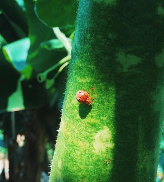 Chinh phuc hang En - buoc dem de den voi Son Doong hinh anh 2 Vườn quốc gia Phong Nha - Kẻ Bàng có thảm thực vật, động vật đa dạng. Ảnh: Minh Trần.