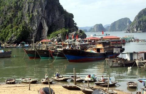 Quang Ninh cam 'chat chem' du khach mac ket do bao hinh anh