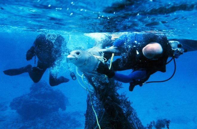 Su song cua dai duong: nhung hinh anh chua duoc cong bo hinh anh 18 Hai thợ lặn cố giải cứu cho một con hải cẩu bị vướng vào lưới ở vùng biển phía Tây Bắc quần đảo Hawaii