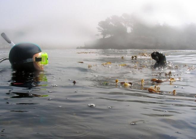 Su song cua dai duong: nhung hinh anh chua duoc cong bo hinh anh 6   Kevin Stierhoff và một con rái cá trong một bức ảnh được chụp vào ngày 30 tháng 9 năm 2005 trong rừng tảo bẹ tại điểm bảo tồn quốc gia Lobos, California Xem ảnh sau