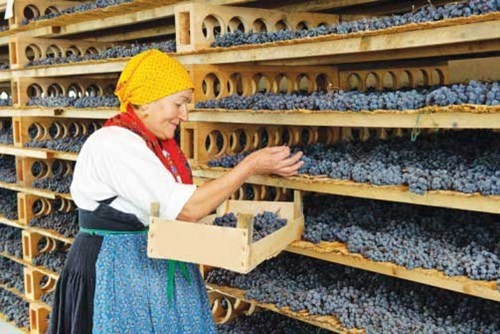 Noi nao dep nhat Italy trong nhung ngay dau thu? hinh anh 6 Bà chủ trong một gia đình tự trồng nho và tự làm rượu vang
