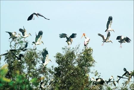 Vườn chim Cà Mau. Ảnh: Baocamau.