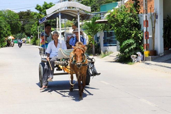 Kham pha ngoai o Nha Trang bang xe ngua hinh anh 1